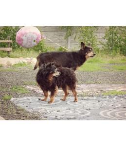 Teddy i Rysiek